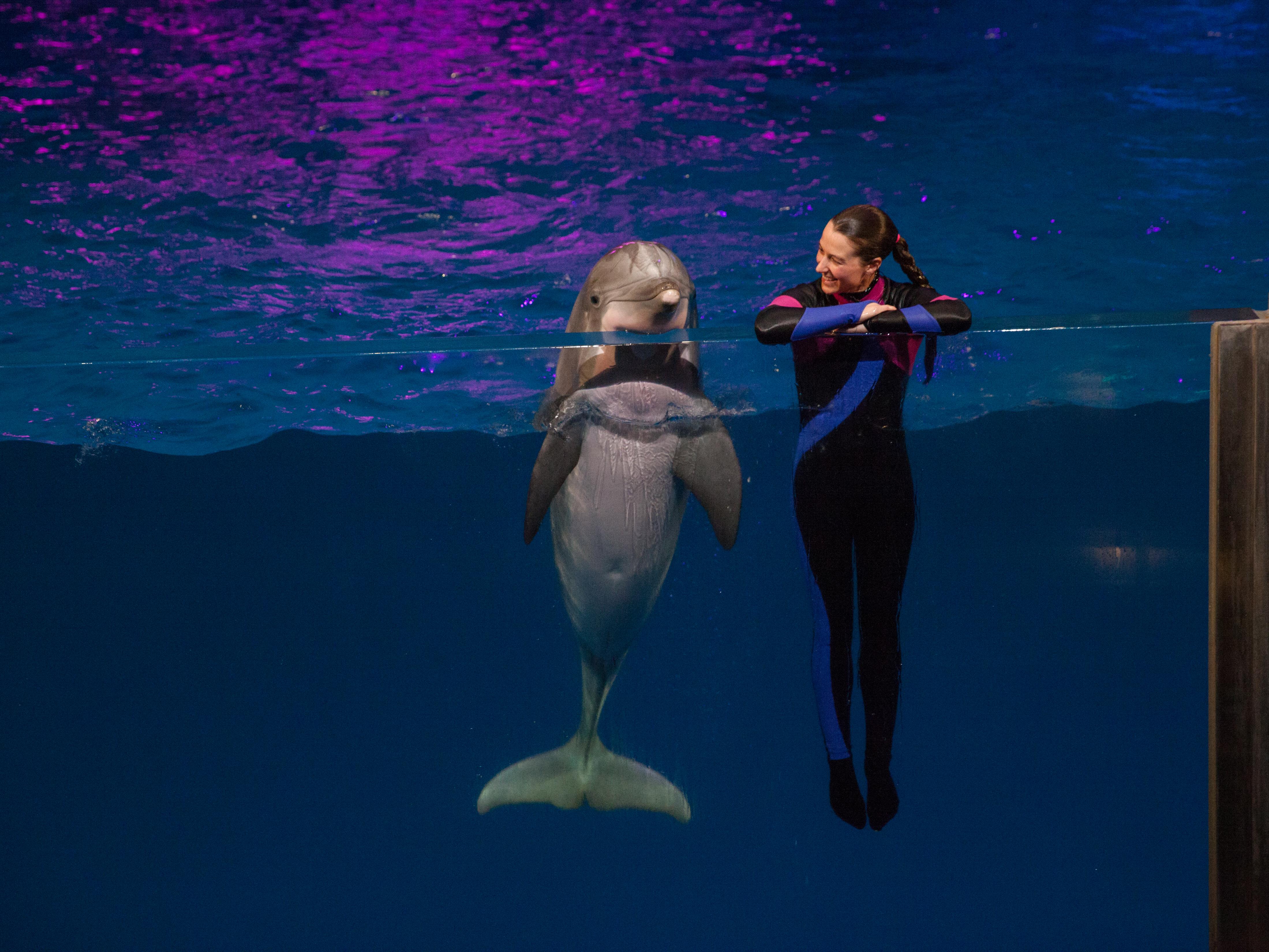 Georgia Aquarium to Host Pre-Race Weekend Ahead of Publix Atlanta Marathon