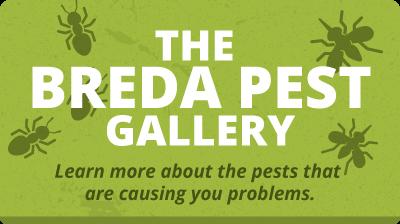 Pest Gallery