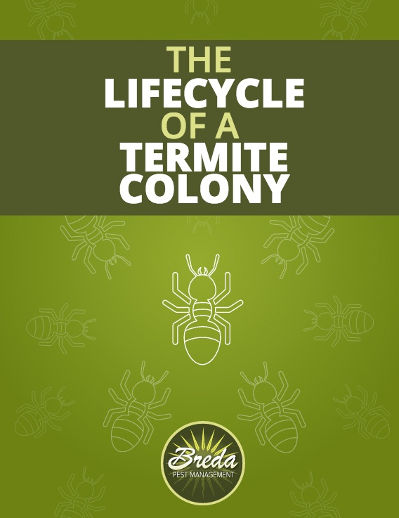 Termite Colony Lifecycle Guide