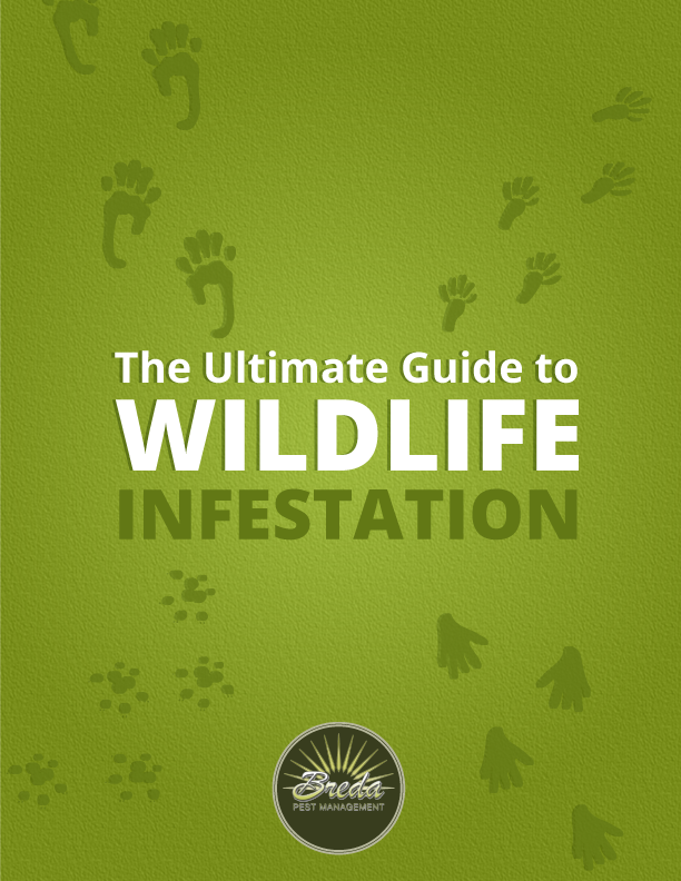Ultimate Guide to Wildlife Infestation