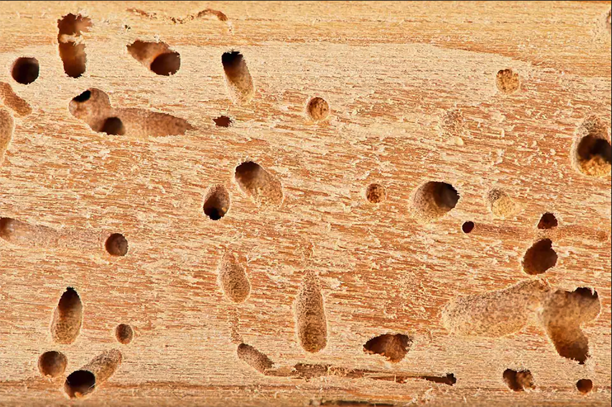 Is it worth buying a house with termite damage
