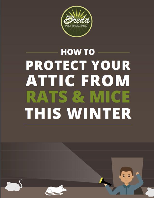 Protect Attic Rats Mice Winter