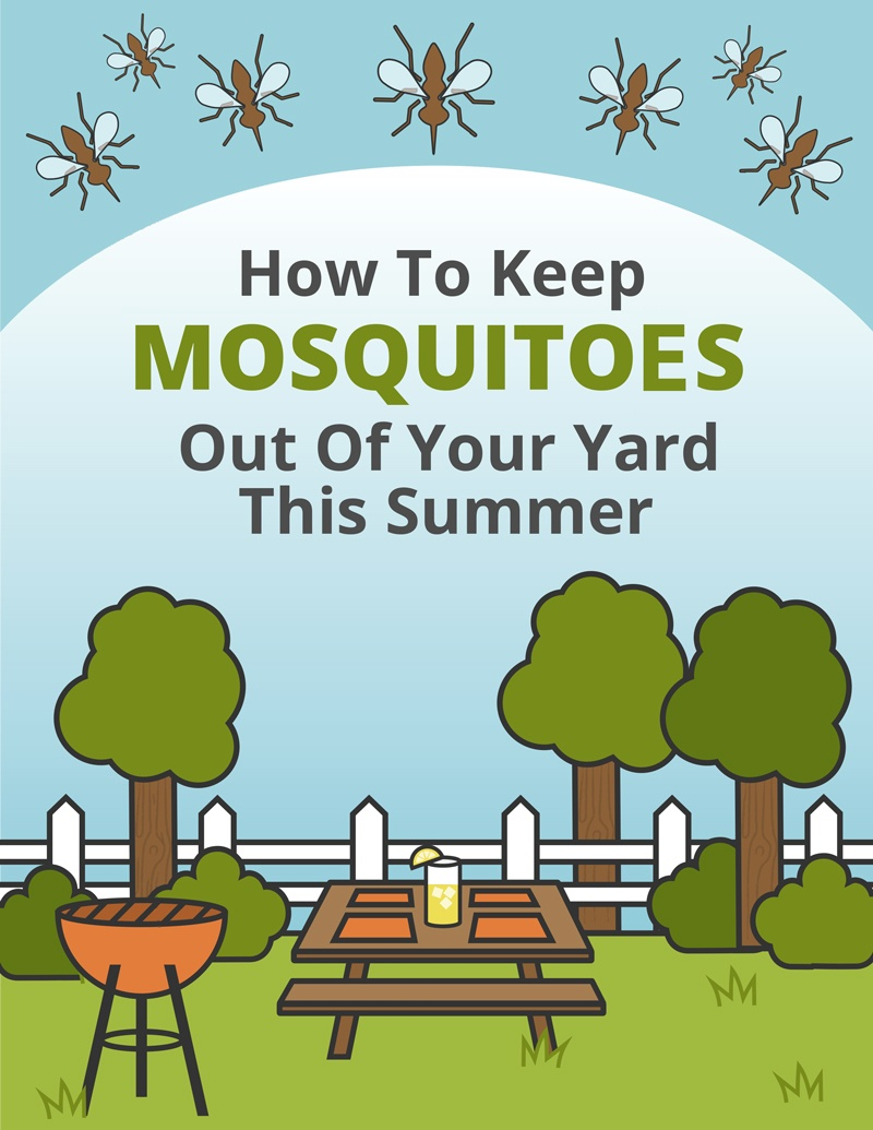 How To Keep Mosquitoes Out Of Your Yard This Summer