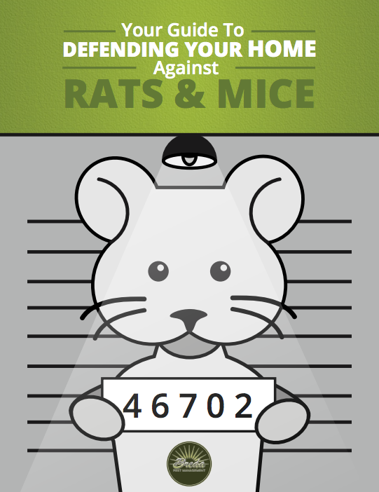 Rats Mice Guide
