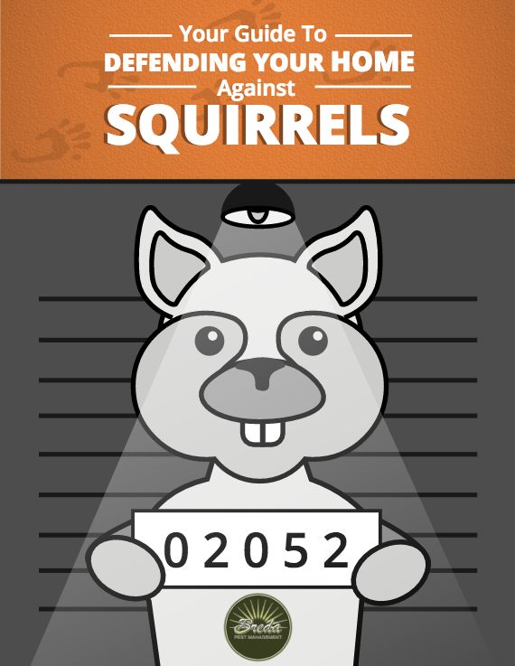 Squirrels Guide