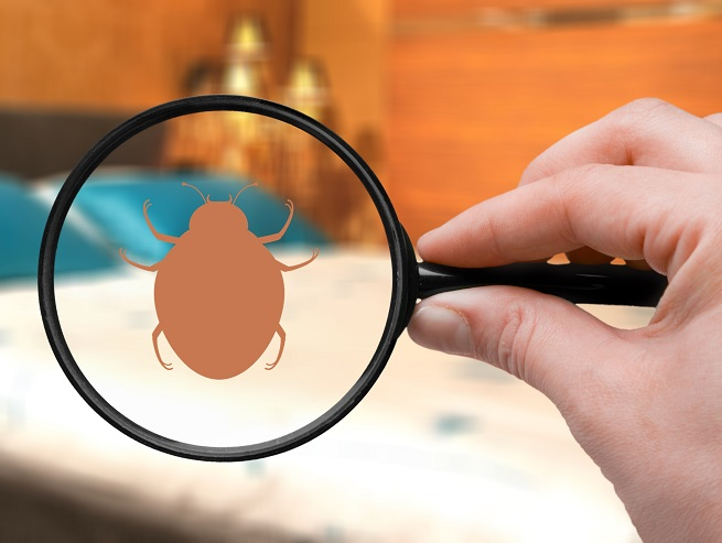 Finding a Bedbug