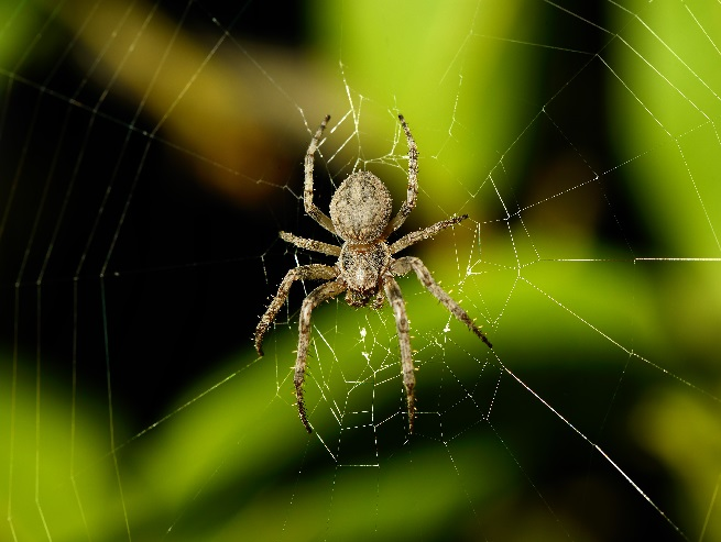 Spider Outdoors