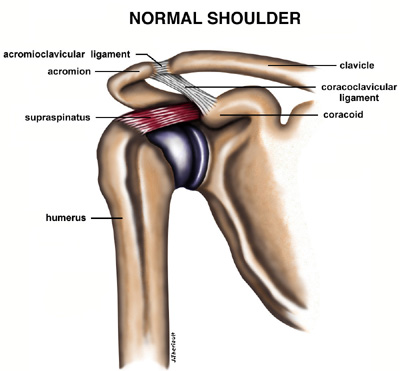 Shoulder Impingement Tendonitis Pinnacle Orthopaedics