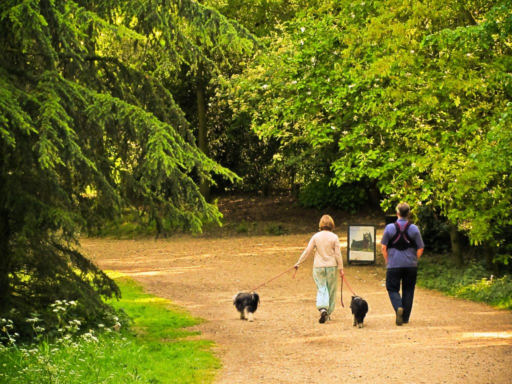 Couple walking dogs in park