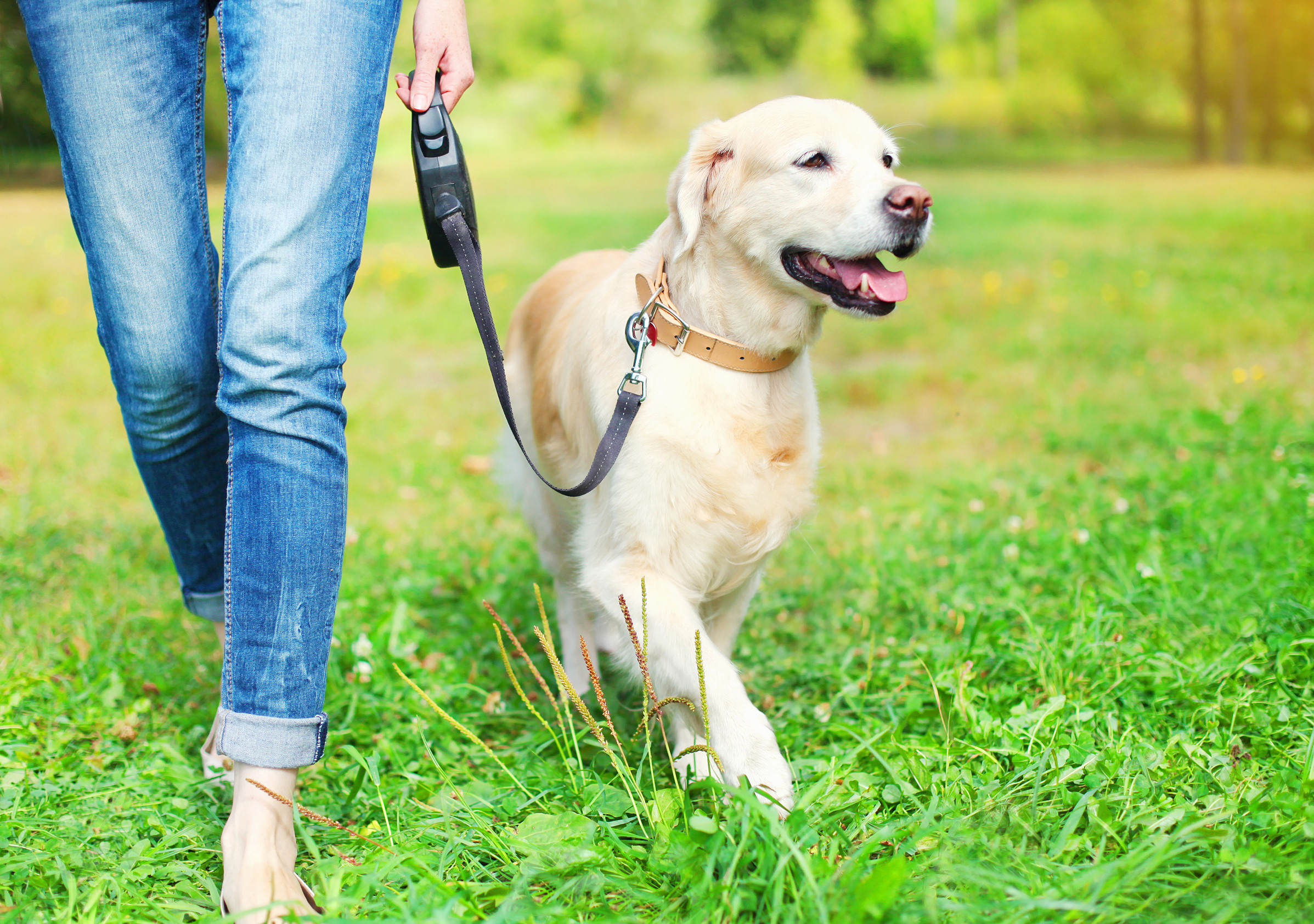 Walking Your Dog for Your Health