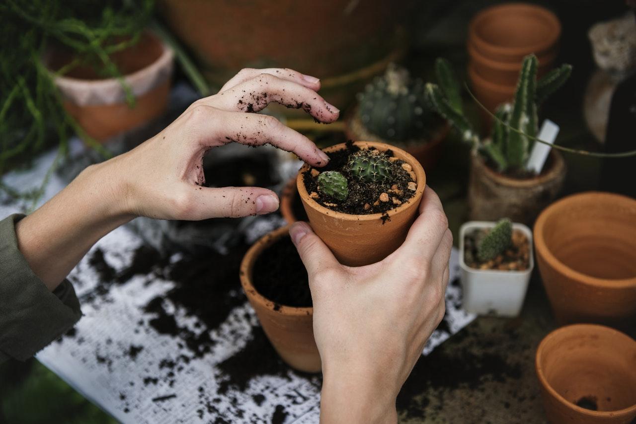 Hands holding a flower pot