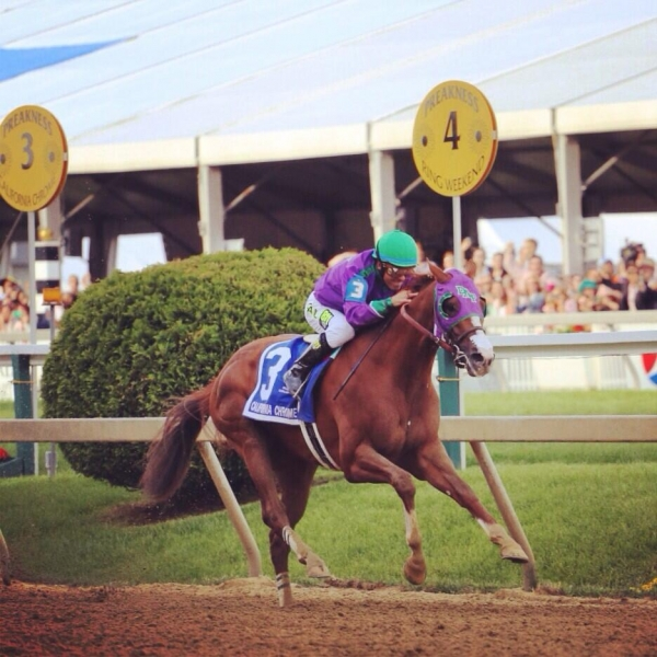811's Triple Crown odds are better than ever!