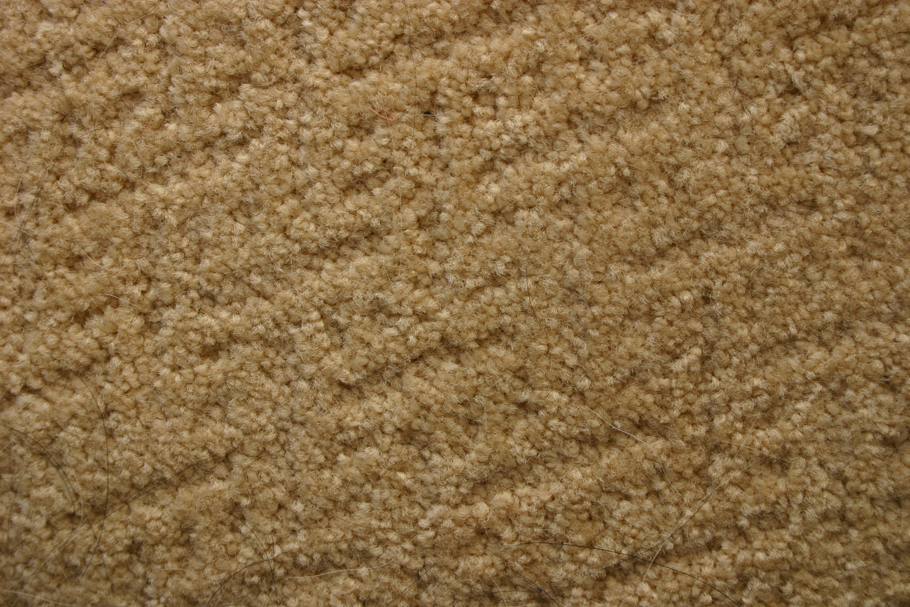 How To Prevent And Fix Water Damaged Carpet After A Rain