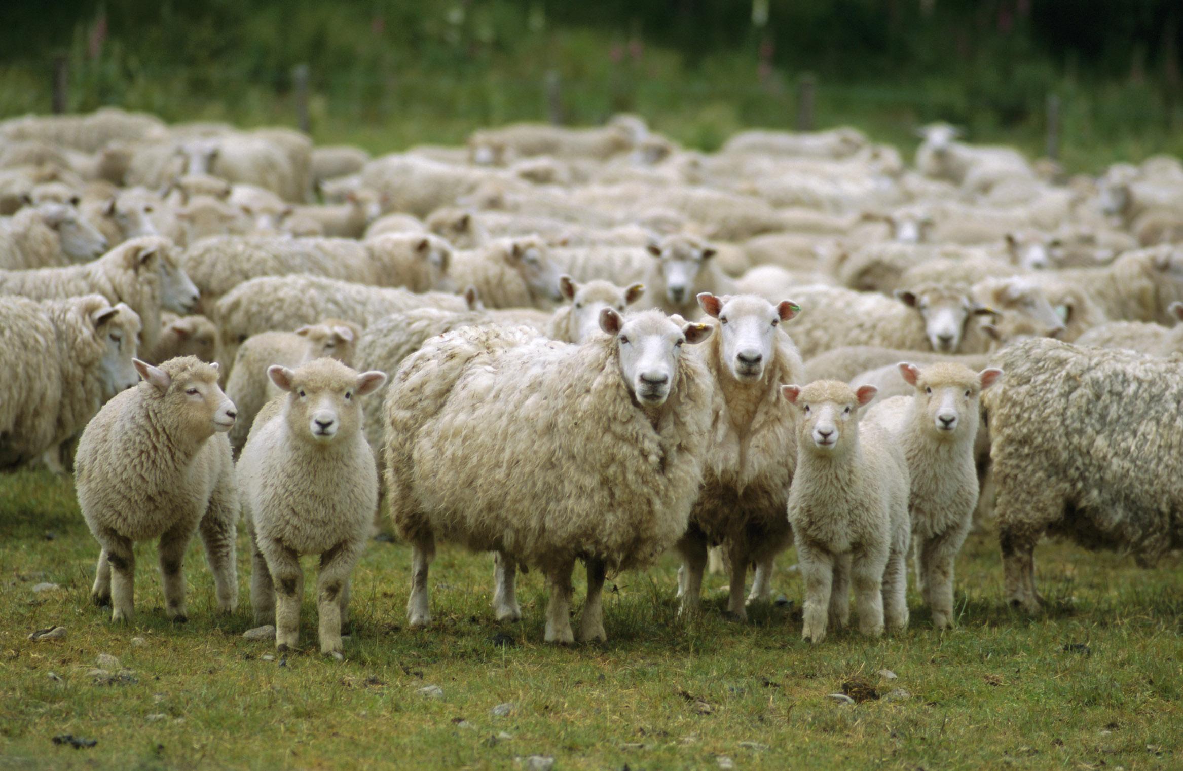 How do you clean wool carpets?   Zerorez Nashville