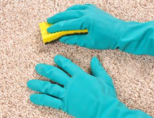 steam carpet cleaner henderson nv