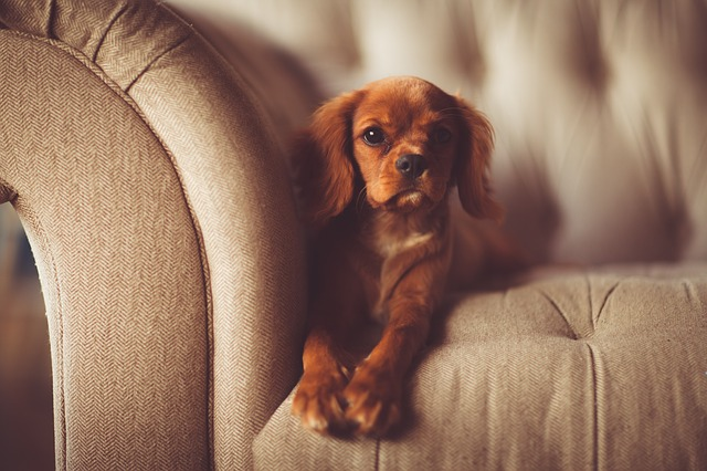 get pet hair off the couch